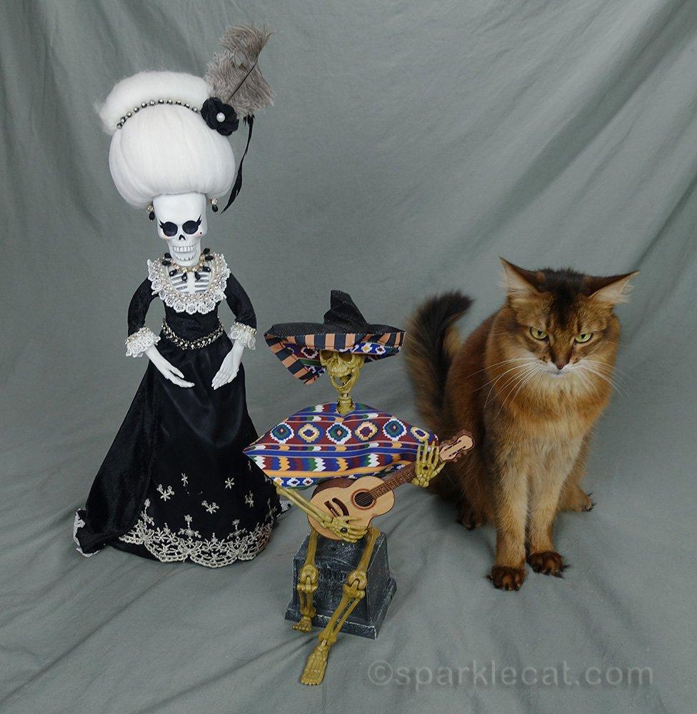 Somali cat bummed that La Suegra showed up