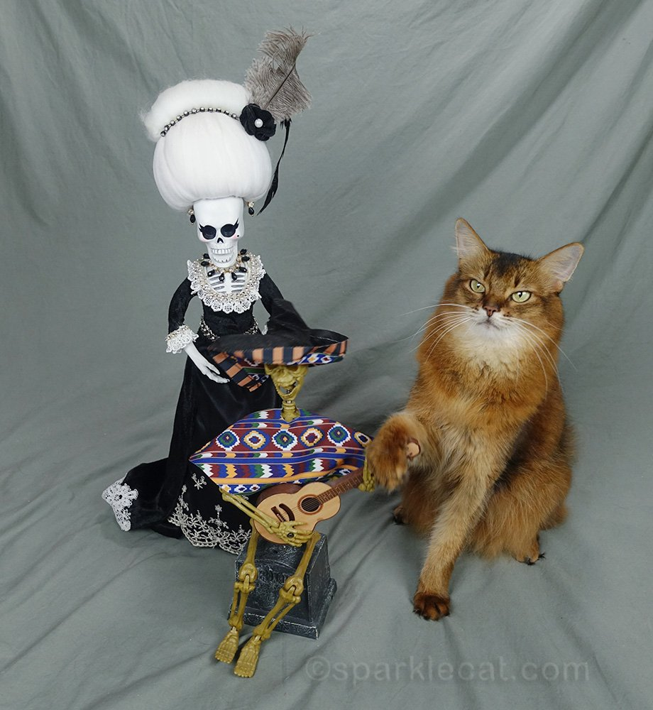 Somali cat with paw on guitar in spite of La Suegra