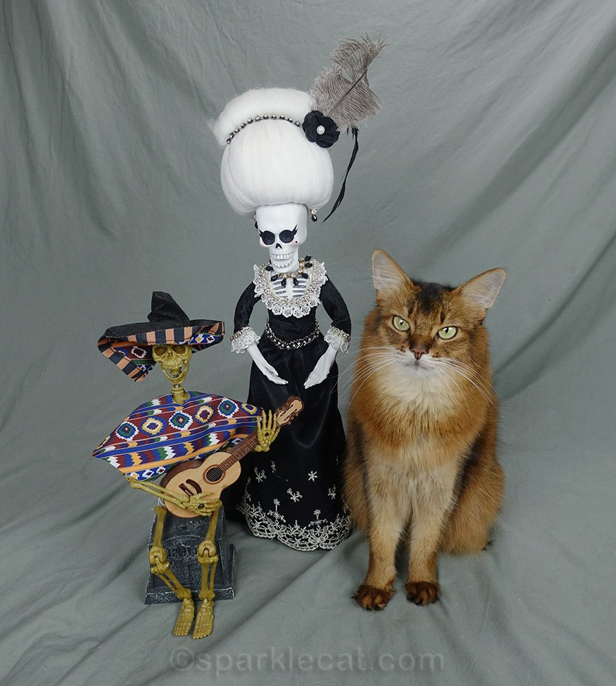 Somali cat posing with La Suegra and Day of the Dead guitar player