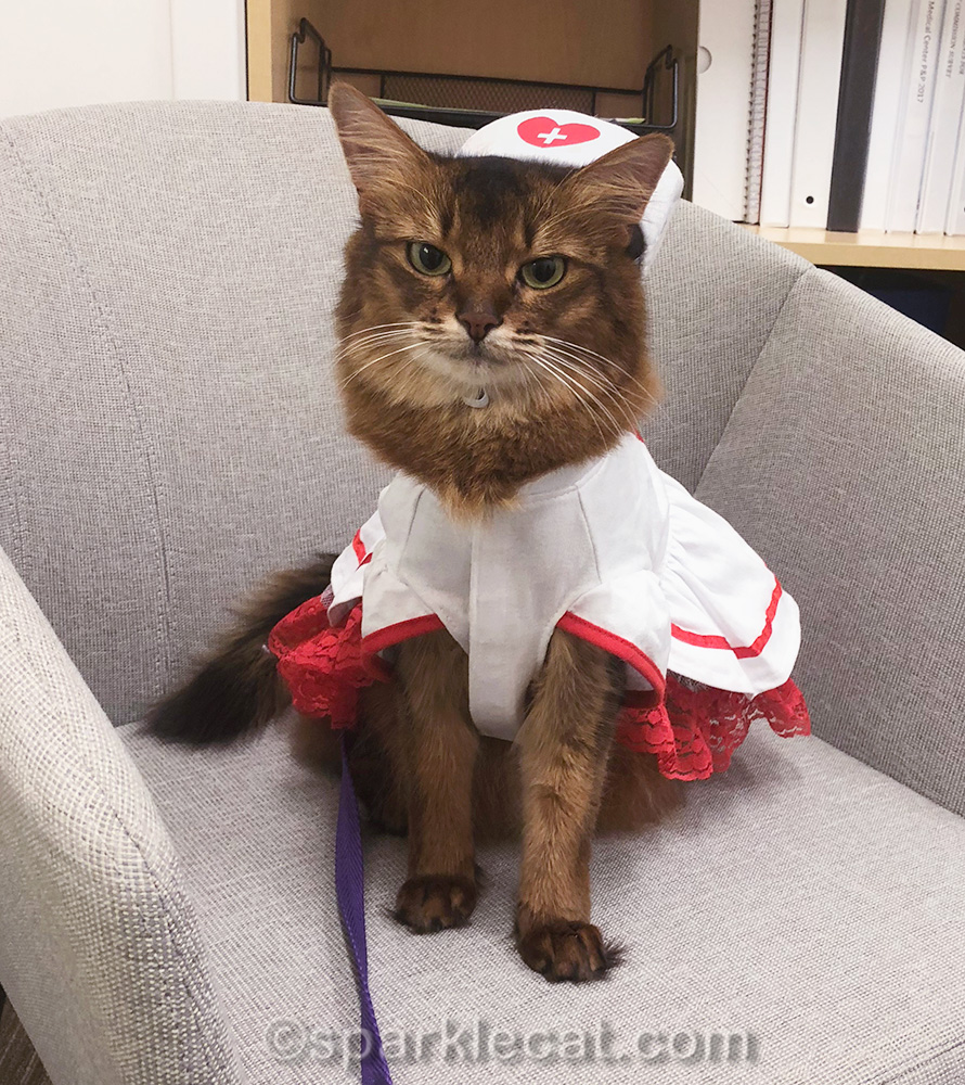 kitty nurse looking stern