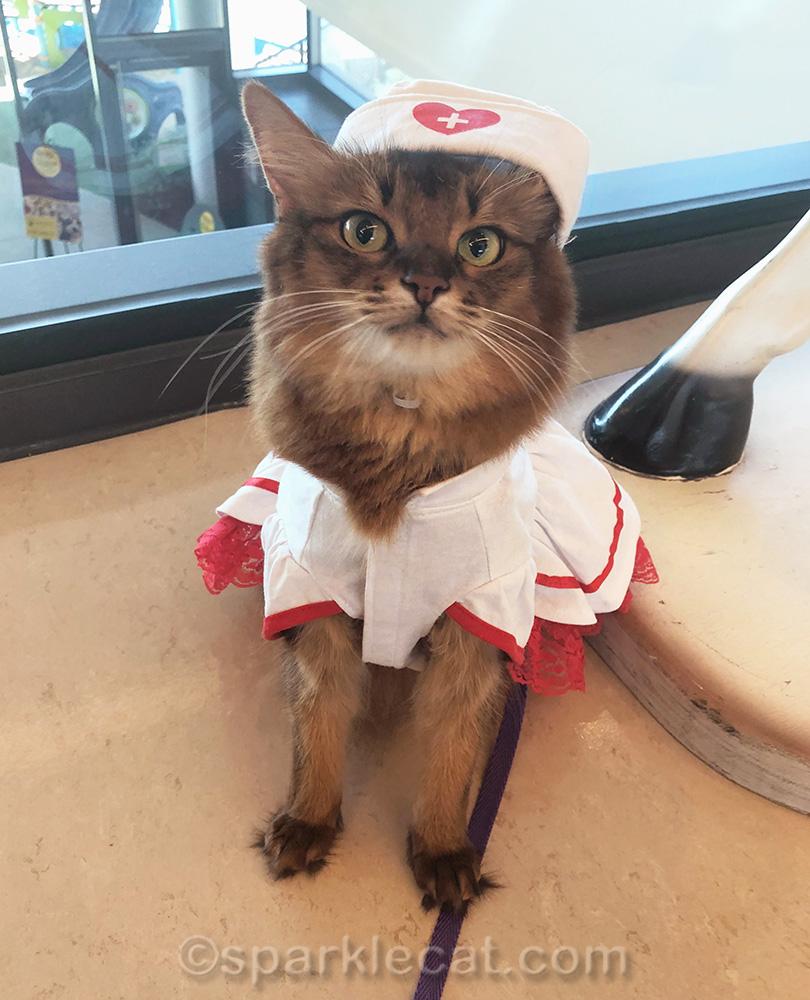 nurse kitty with hat on crooked