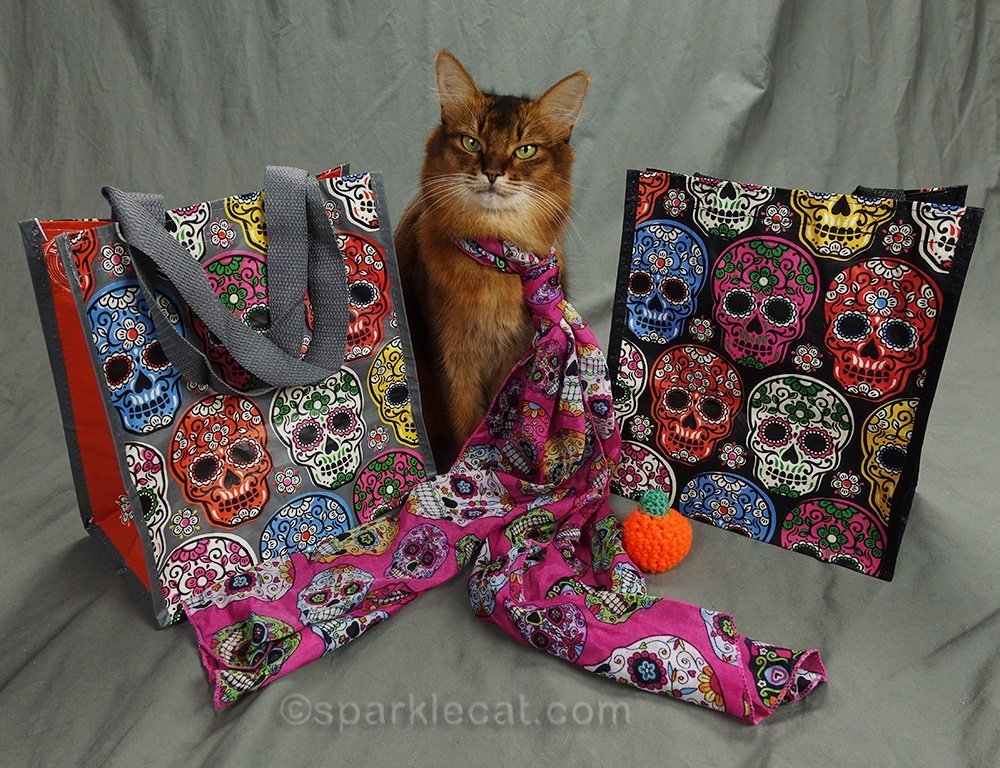 somali cat with day of the dead gifts