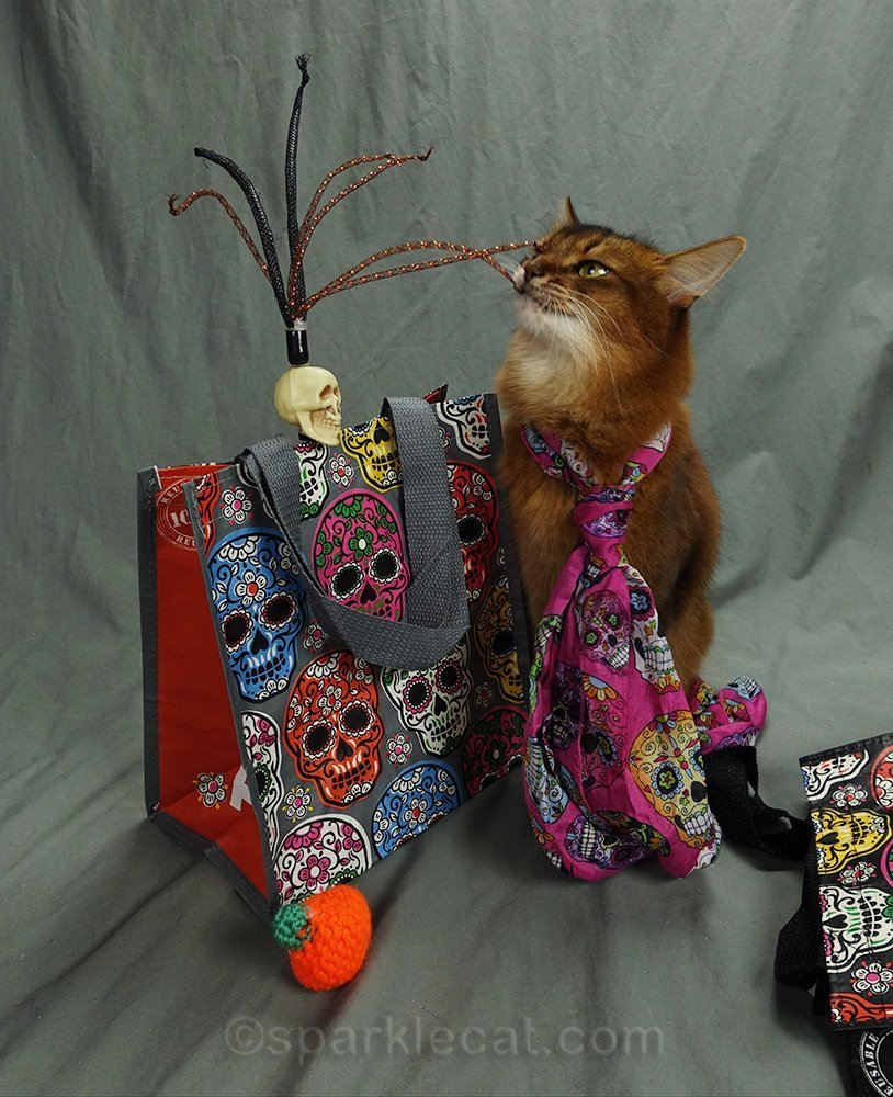 somali cat faces a zombie skull toy