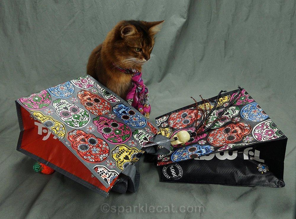 somali cat looking at dead skull toy