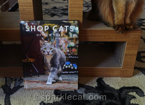 cover of shop cats of New York and somali cat feet