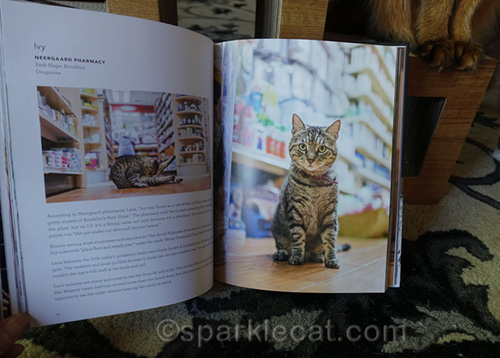 pages from shop cats of new york