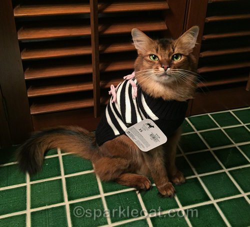 somali cat with sweater on with price tag