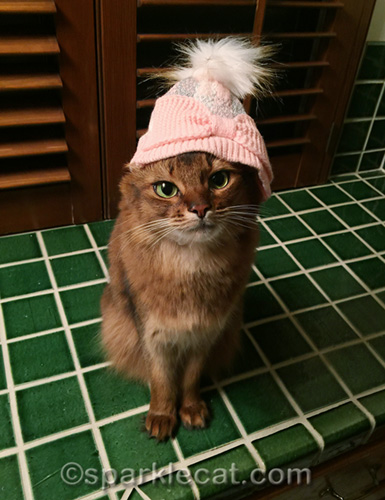 somali cat wearing knit cap, crookedly