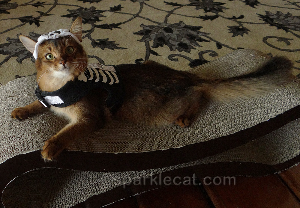 somali kitten in skeleton costume