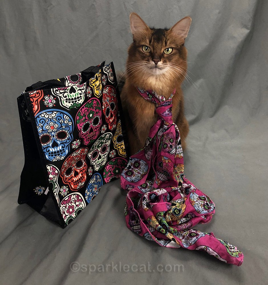 somali cat wearing Day of the Dead scarf