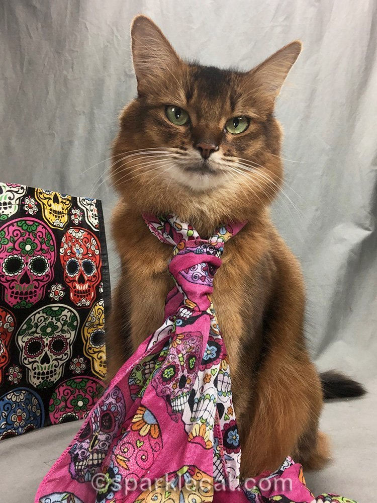 somali cat selfie wearing day of the dead scarf