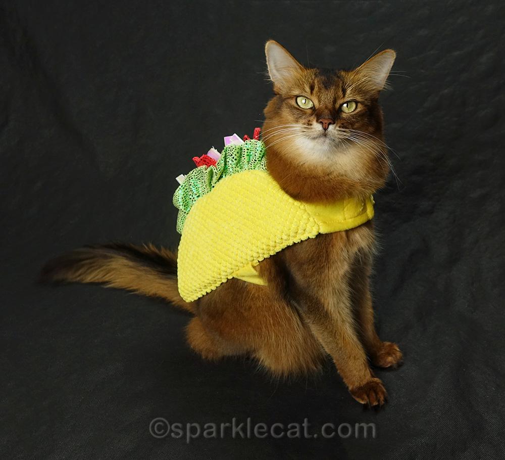 somali cat in tacocat costume