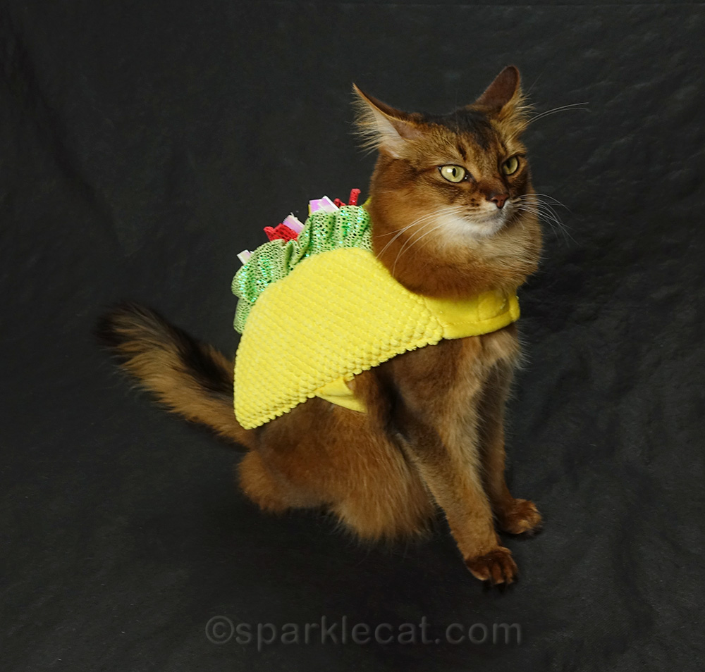 dubious cat in tacocat costume
