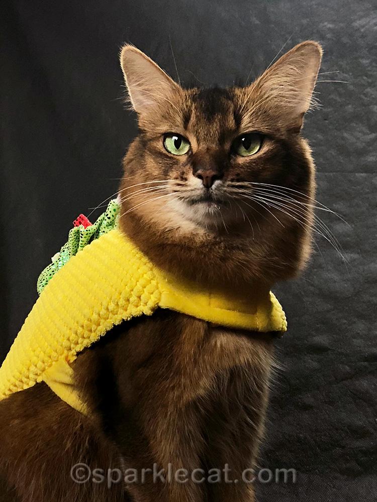 somali cat selfie with tacocat costume