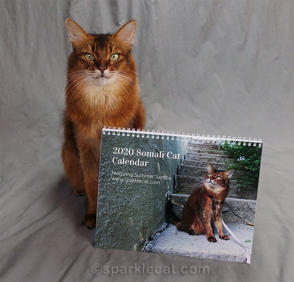 somali cat showing off her 2020 calendar