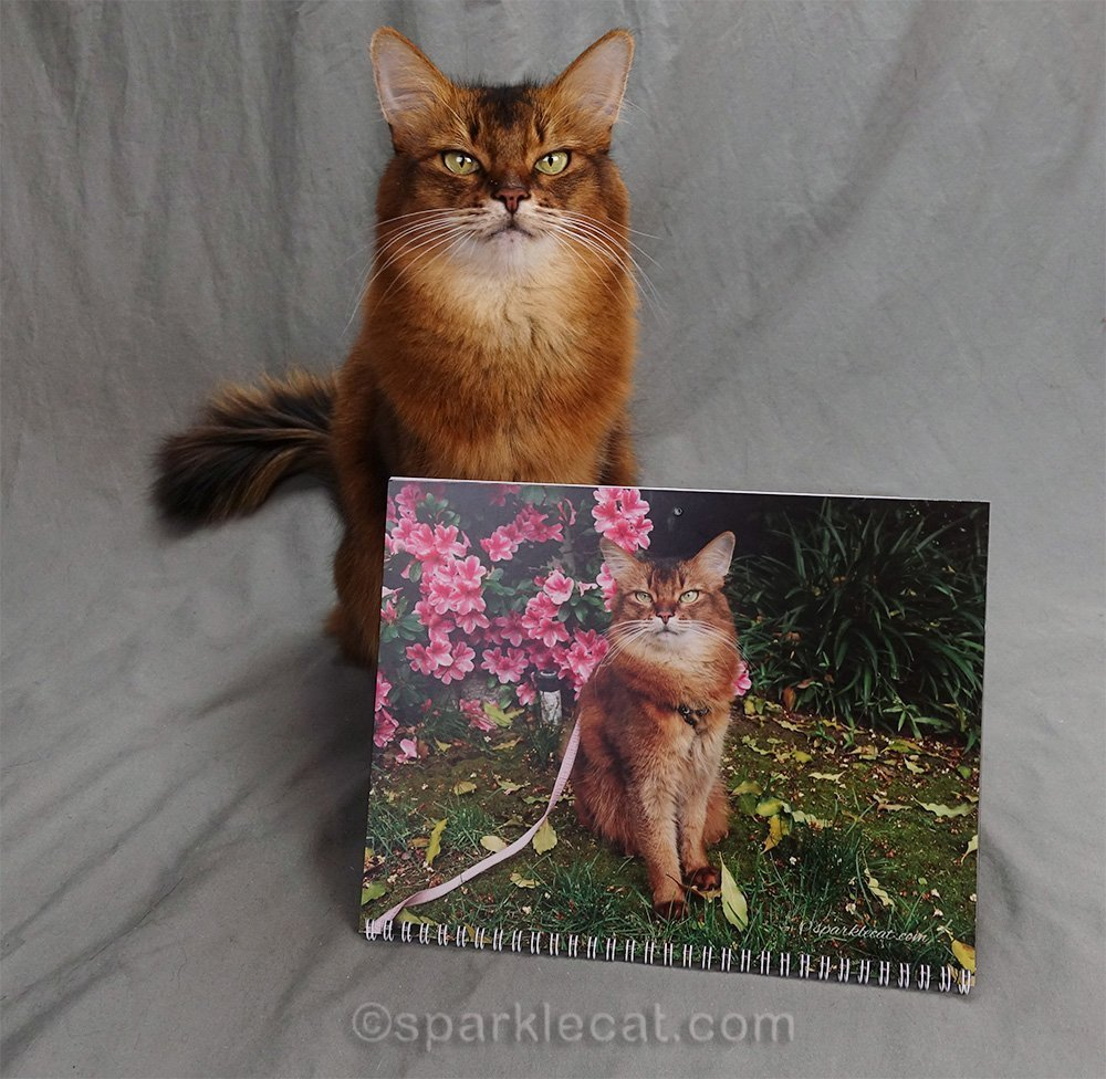 somali cat calendar page for March