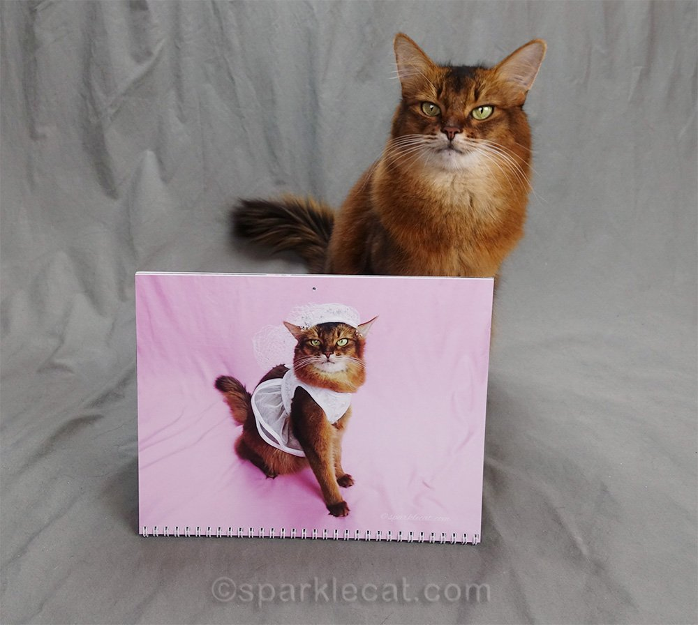 somali cat calendar page in wedding dress