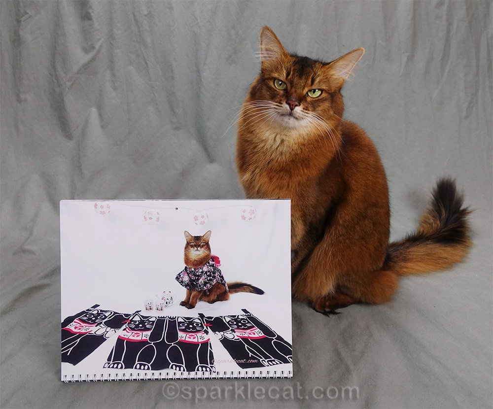 calendar page of somali cat in kimono with Lucky Cat decor