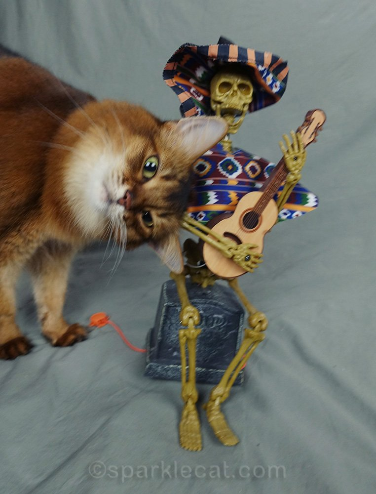somali cat head butting musical skeleton