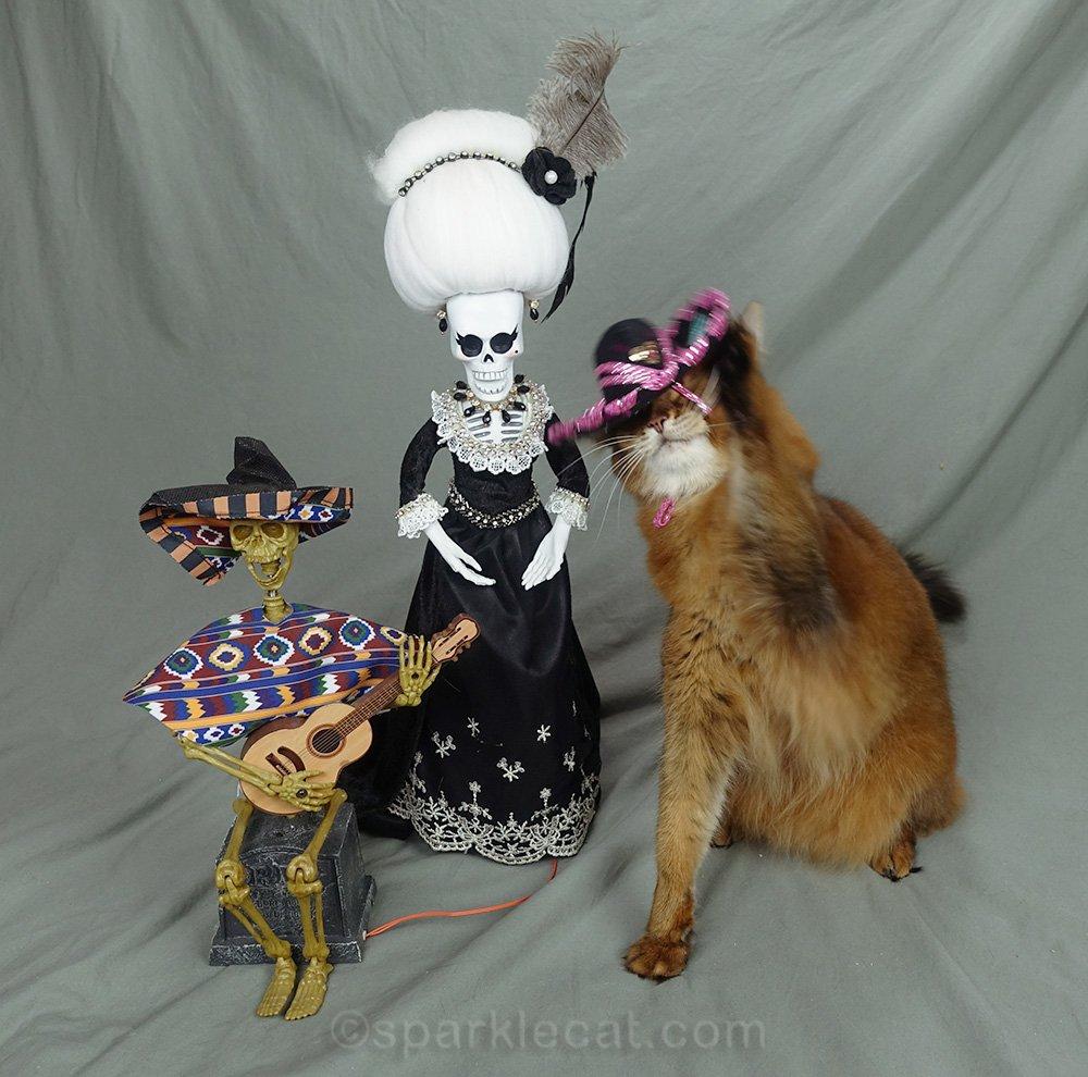 somali cat removing sombrero