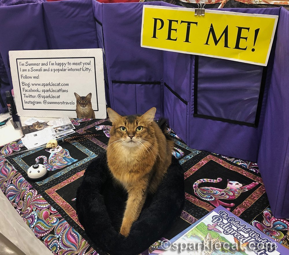 somali cat at cat show