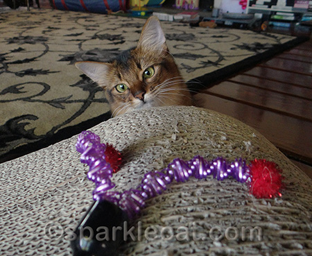 Don't worry - I will kill this vicious toy!