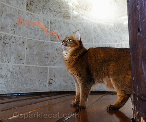 airborne pipe cleaner with somali cat