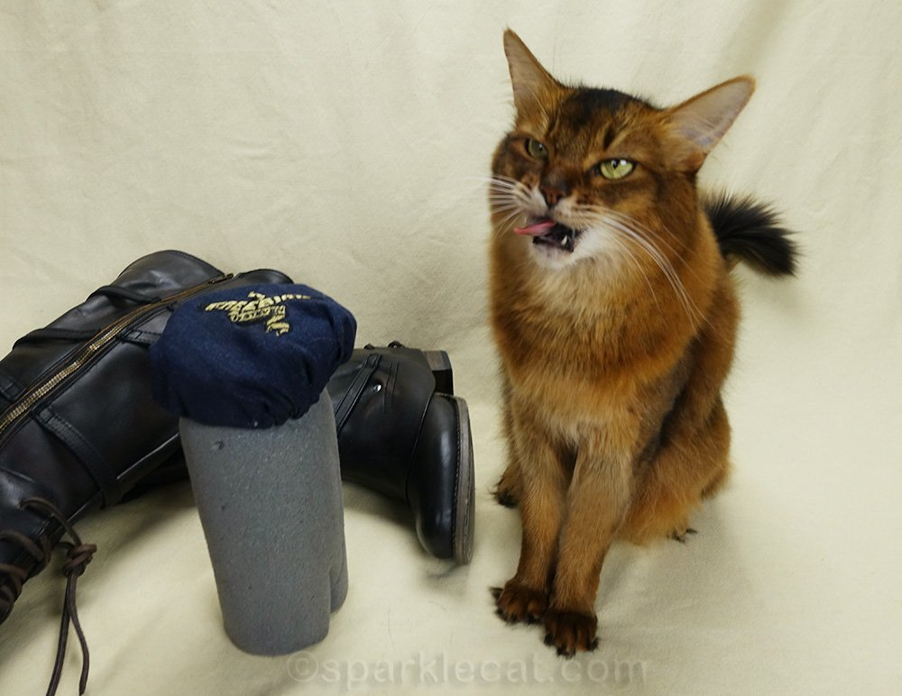 somali cat making weird face in latest photo flubs