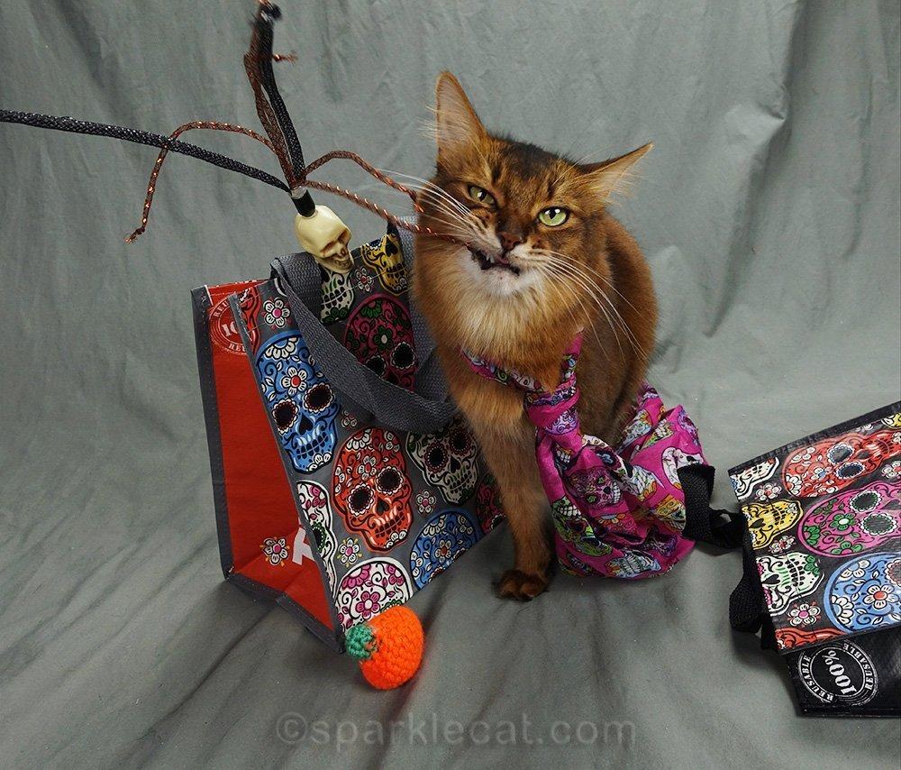 somali cat chomping on skull cat toy