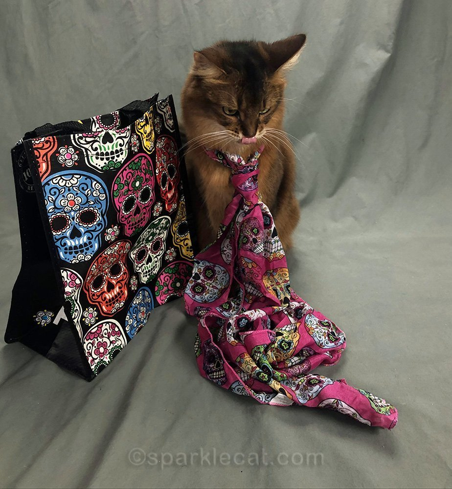 somali cat looking at long day of the dead scarf