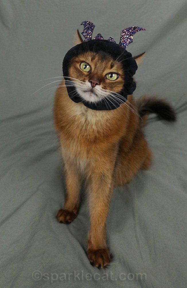 somali cat wearing bat hair tie as headpiece