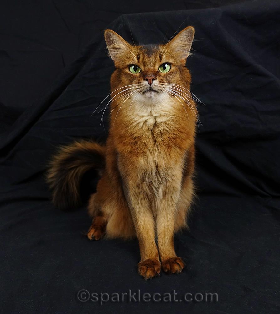 celeb-kitty that needs staff