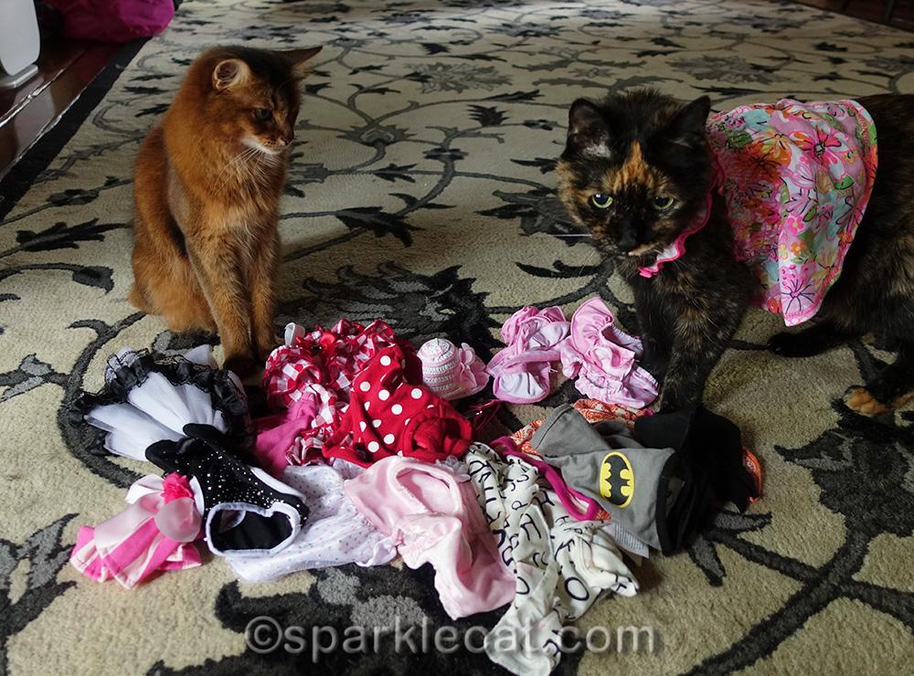 celeb-kitty needs a wardrobe mistress