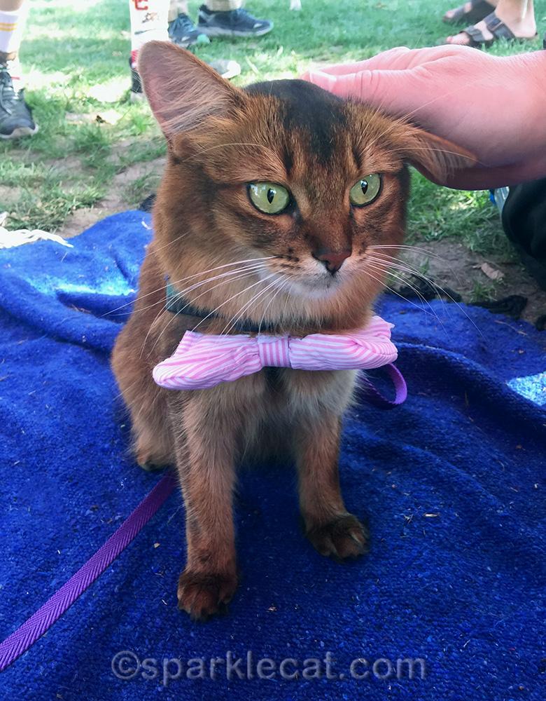 celeb-kitty with bodyguard
