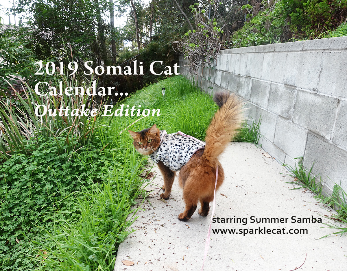 Mock-up of cover for Summer's 2019 Outtake Calendar