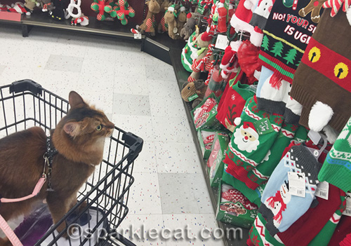 somali cat looking at a display of ugly pet sweaters