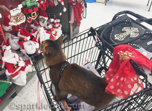 somali cat looking at Christmas clothes for pets