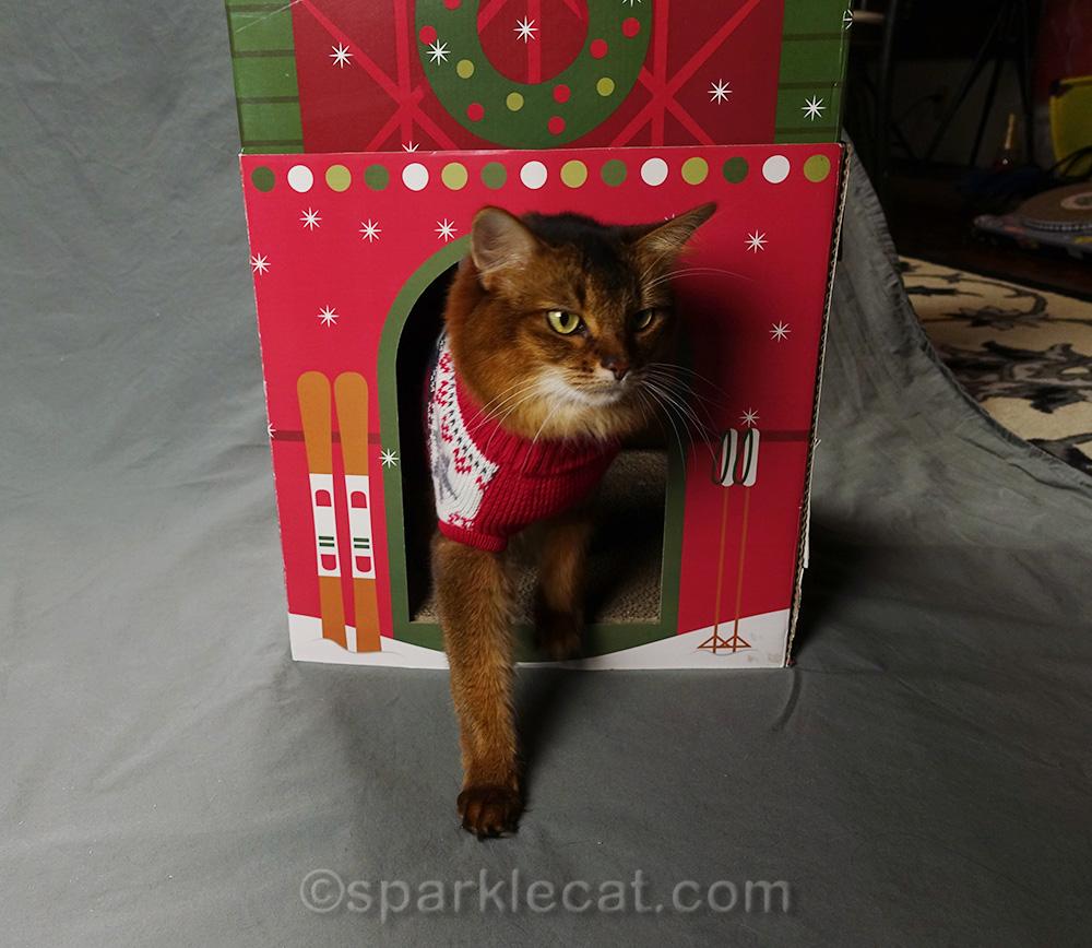 somali cat inside a holiday scratcher