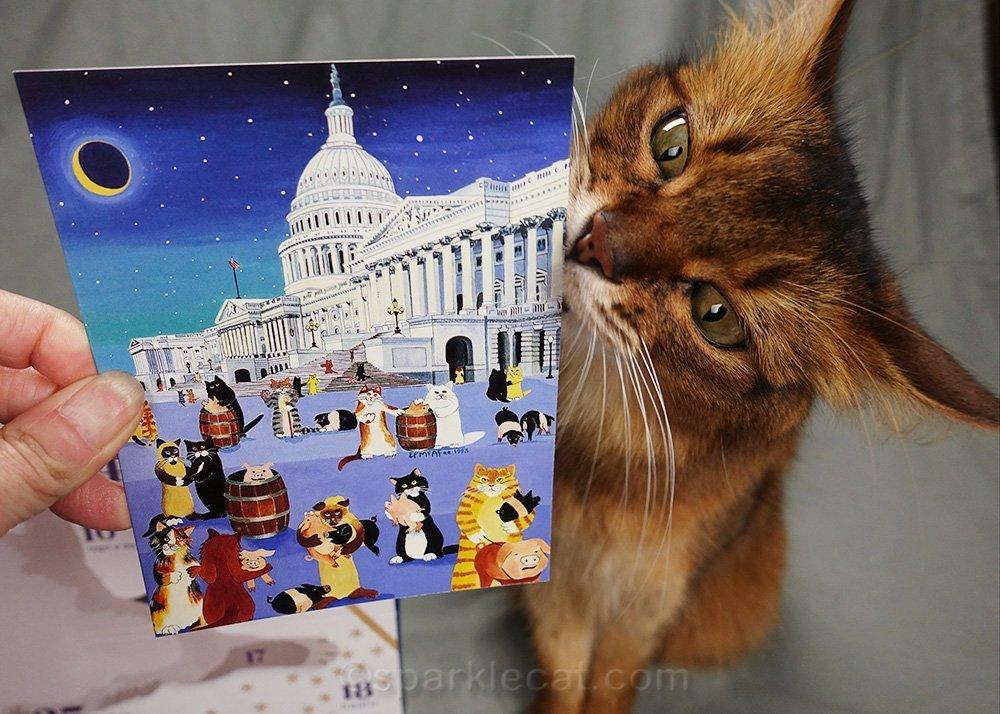 somali cat sniffing greeting card