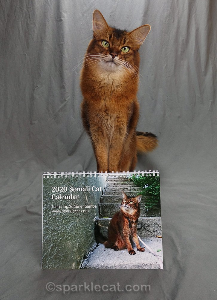 somali cat with her 2020 calendar