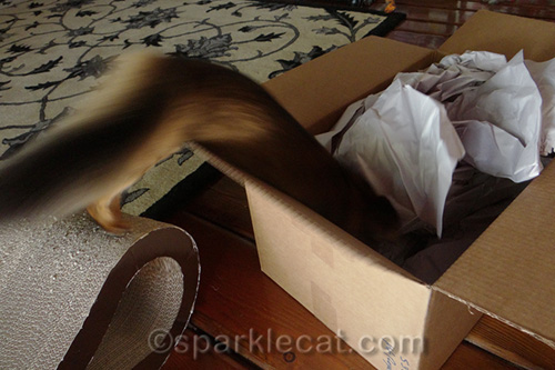 trick photo of somali kitten leaping into a big box
