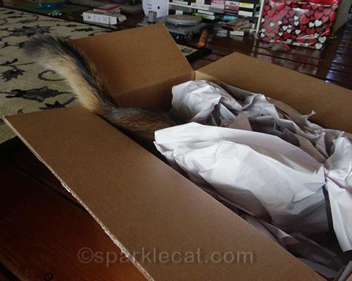 somali kitten disappearing into large box