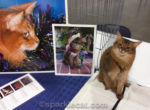 somali cat posing next to her own photo