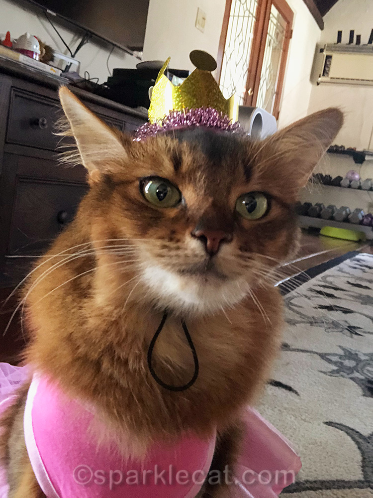 princess day cat selfie