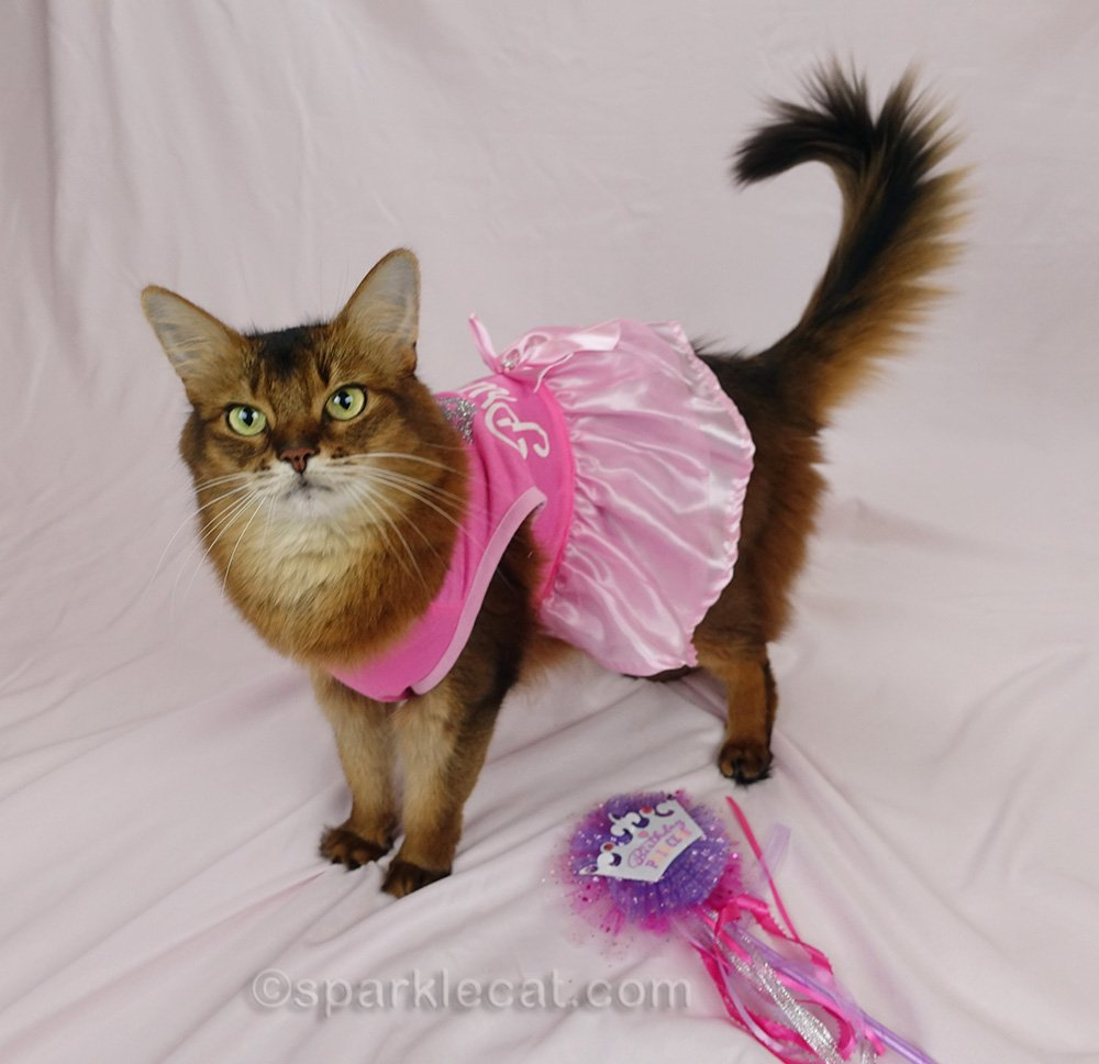 somali cat with birthday princess wand