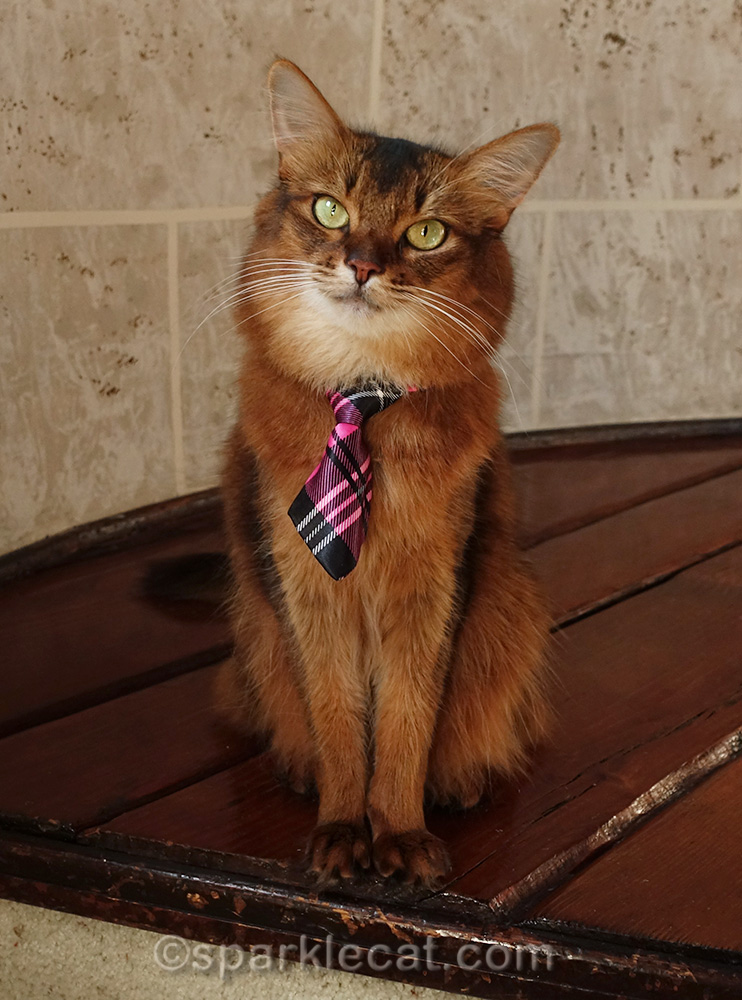 kitty wisdom from a public cat