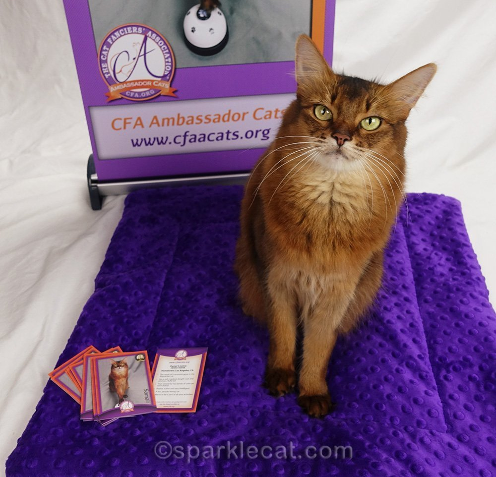 somali ambassador cat with her new trading cards, pad and banner