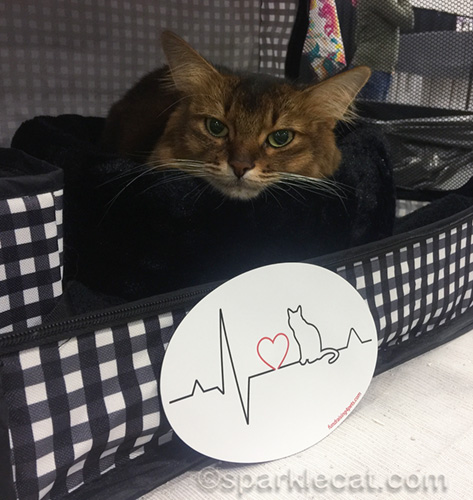somali cat with therapy cat magnet