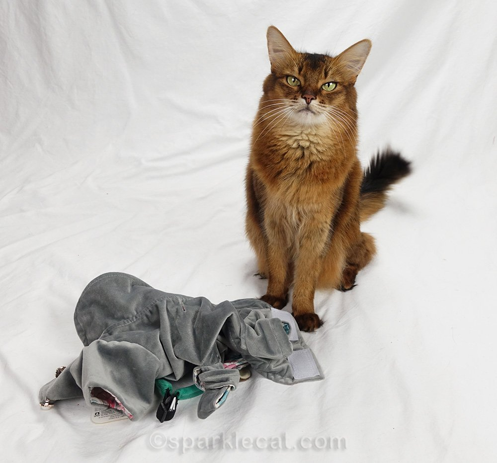 somali cat with her feline fashion in a pile