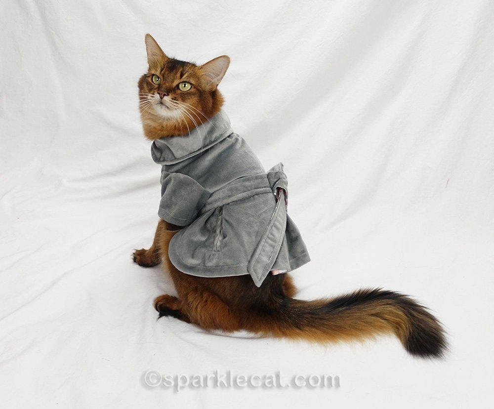 somali cat showing back of her plush gray jacket